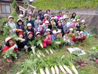 「元気野菜」収穫とクッキング2017