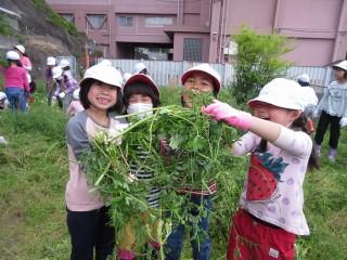 元気野菜20170501