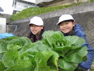 元気野菜収穫・クッキング