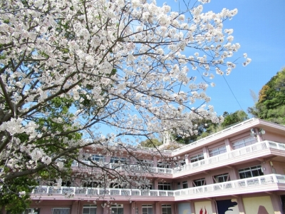 精道の桜 2020